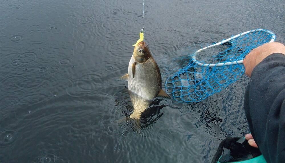 Как отсечь мелочь на рыбалке и ловить крупную рыбу: 5 способов