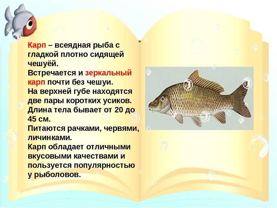 Зеркальный карп и другие виды этой рыбы