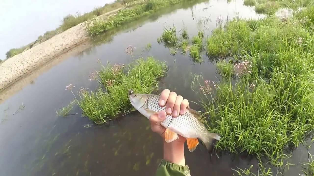 Редкие виды рыб — реки пензенской области, какие рыбы водятся в суре.