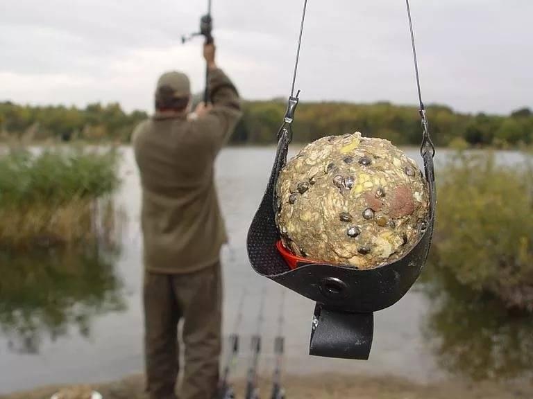 На что ловить сазана в августе: особенности ловли, на какую наживку клюет