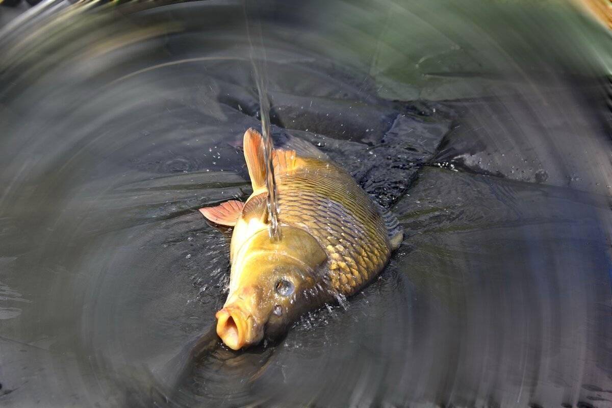 Рыбалка в бисерово – правила платной рыбалки