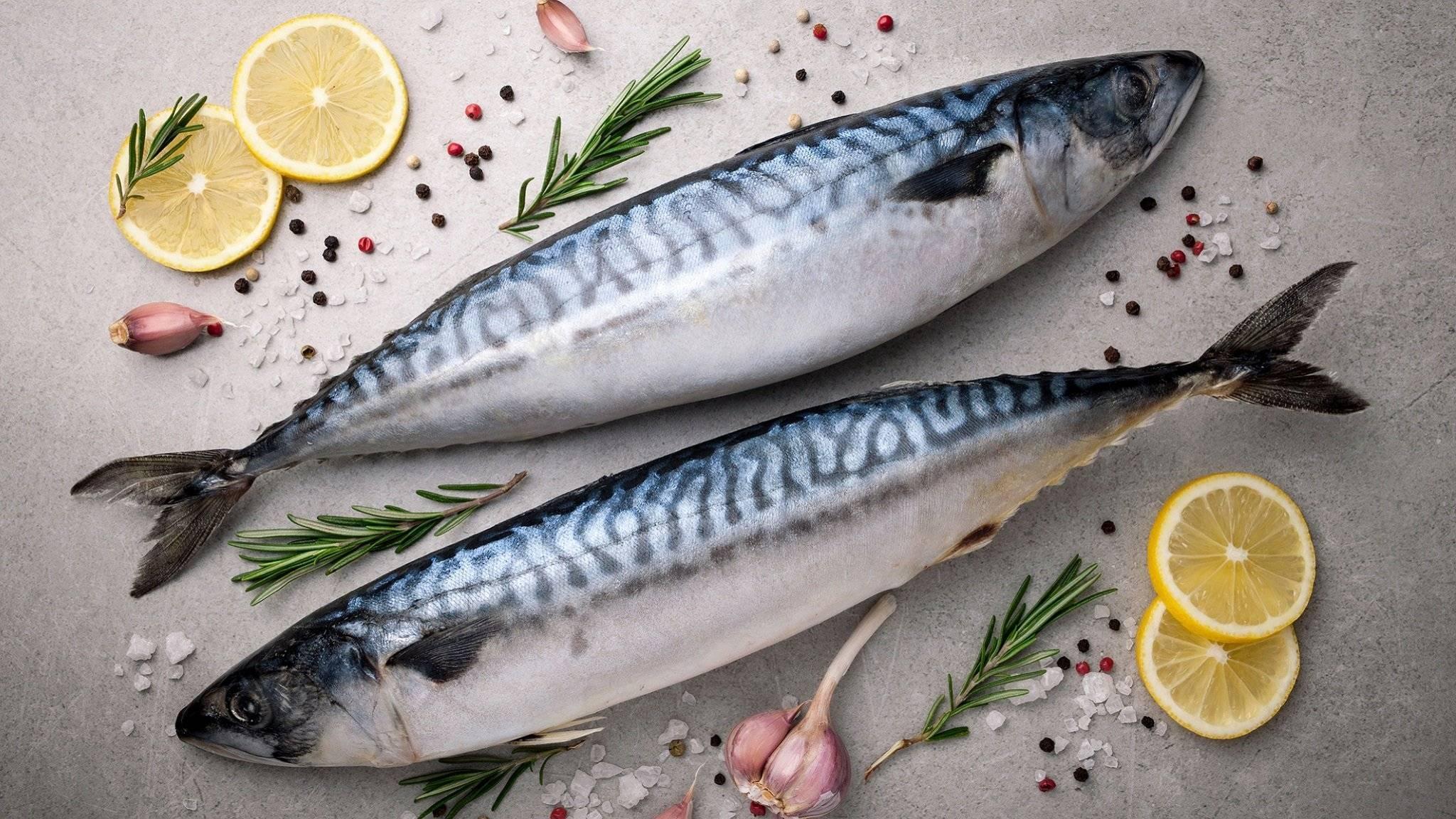 Рыба скумбрия: среда обитания. морская или речная это рыба?
