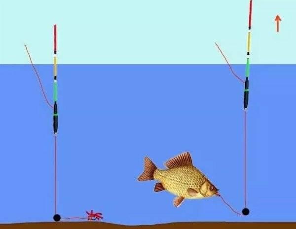Ловля окуня на поплавочную удочку: как ловить, особенности и техника рыбалки