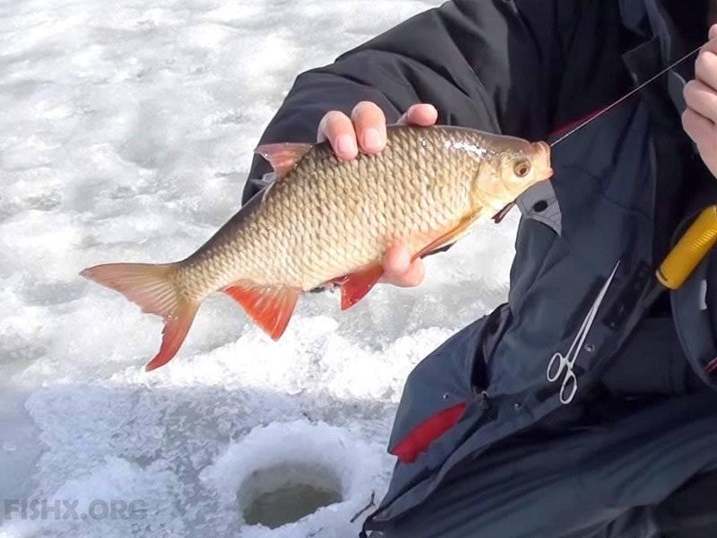 Ловля плотвы зимой на мормышку и покаток   видео с рыбалки