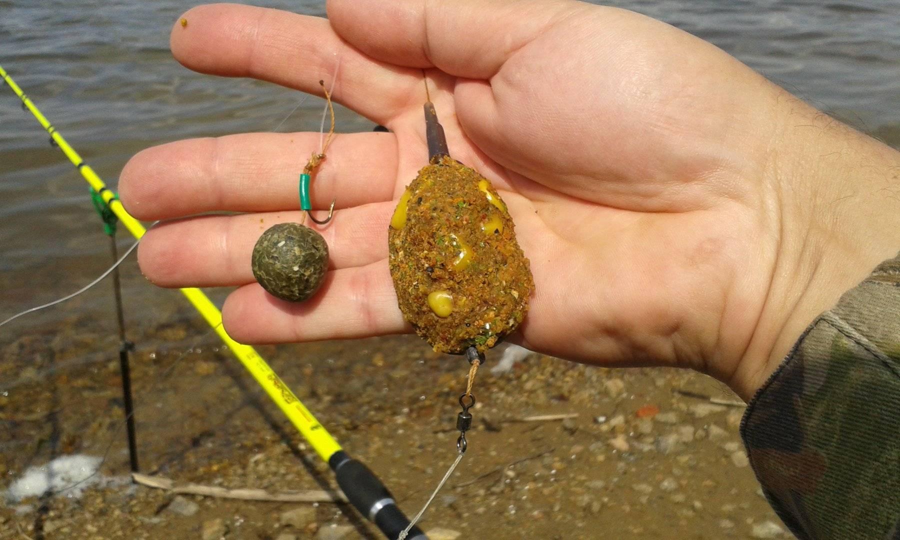 На что клюют карпы? лучшие наживки и приманки в осенний, зимний, весенний и летний период