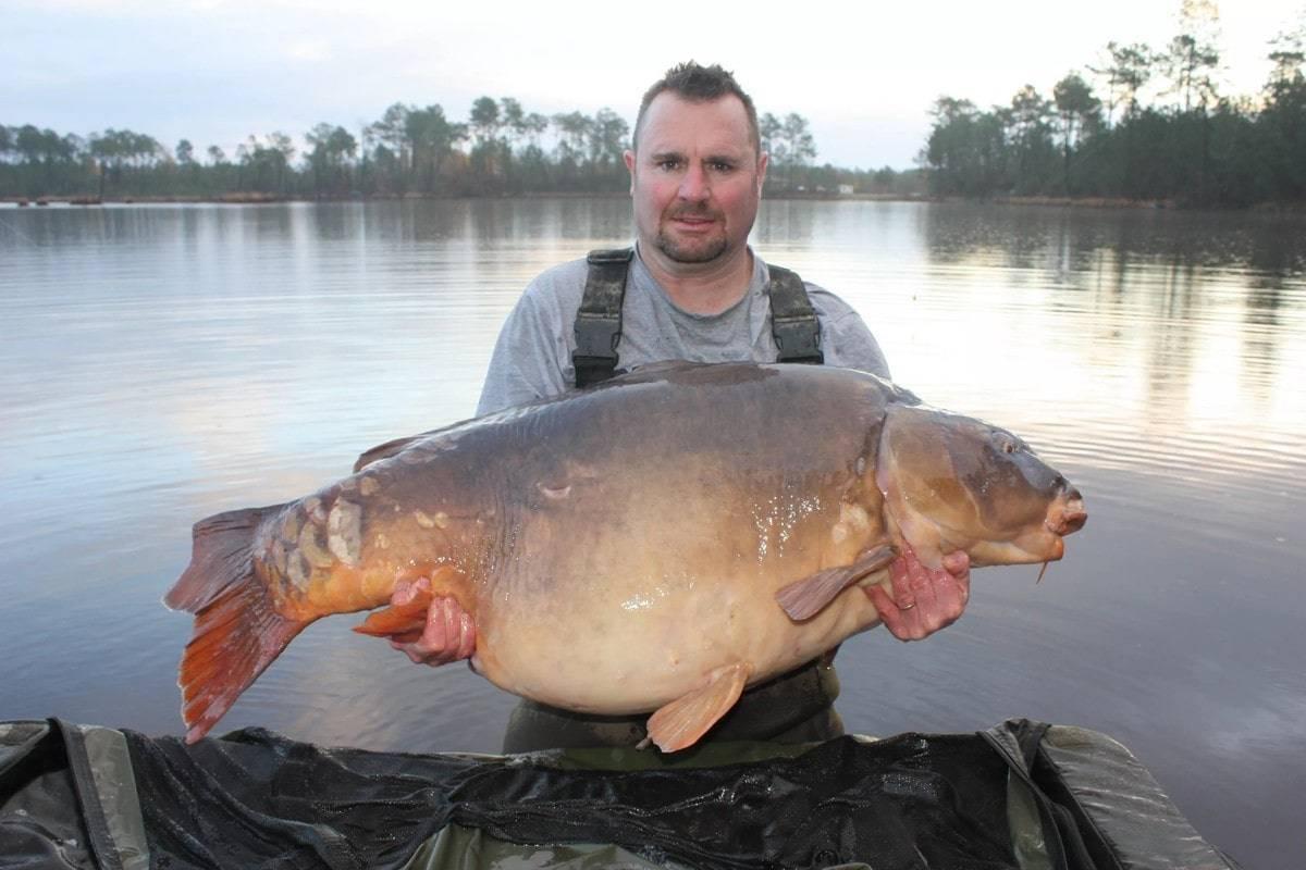 Ловля трофейного карася - как поймать крупного карася – рыбалке.нет