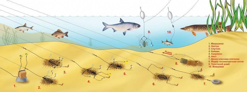 Карповая рыбалка на фидер: снасть и оснастка, приманки и прикормка