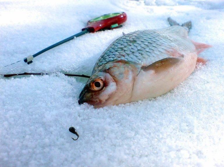 Ловля карпа по первому льду - места ловли и приманки