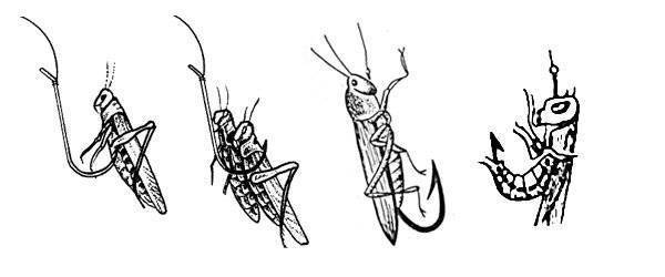 Книги по вязанию рыболовных мушек на голавля