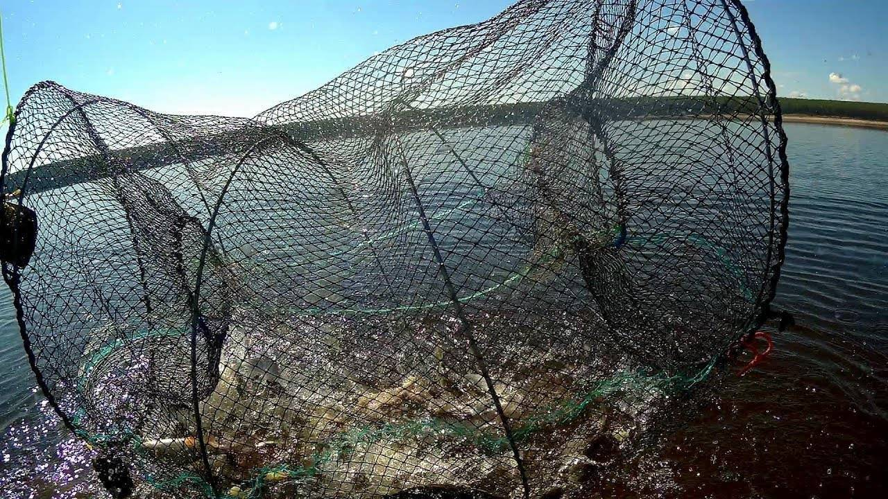 Морда для ловли рыбы своими руками: как сделать рыболовную мордушку из сетки и других материалов по чертежам?