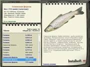 Морская форель — места обитания, приманки и способы ловли. 80 фото рыбы и видео описание ее вылова