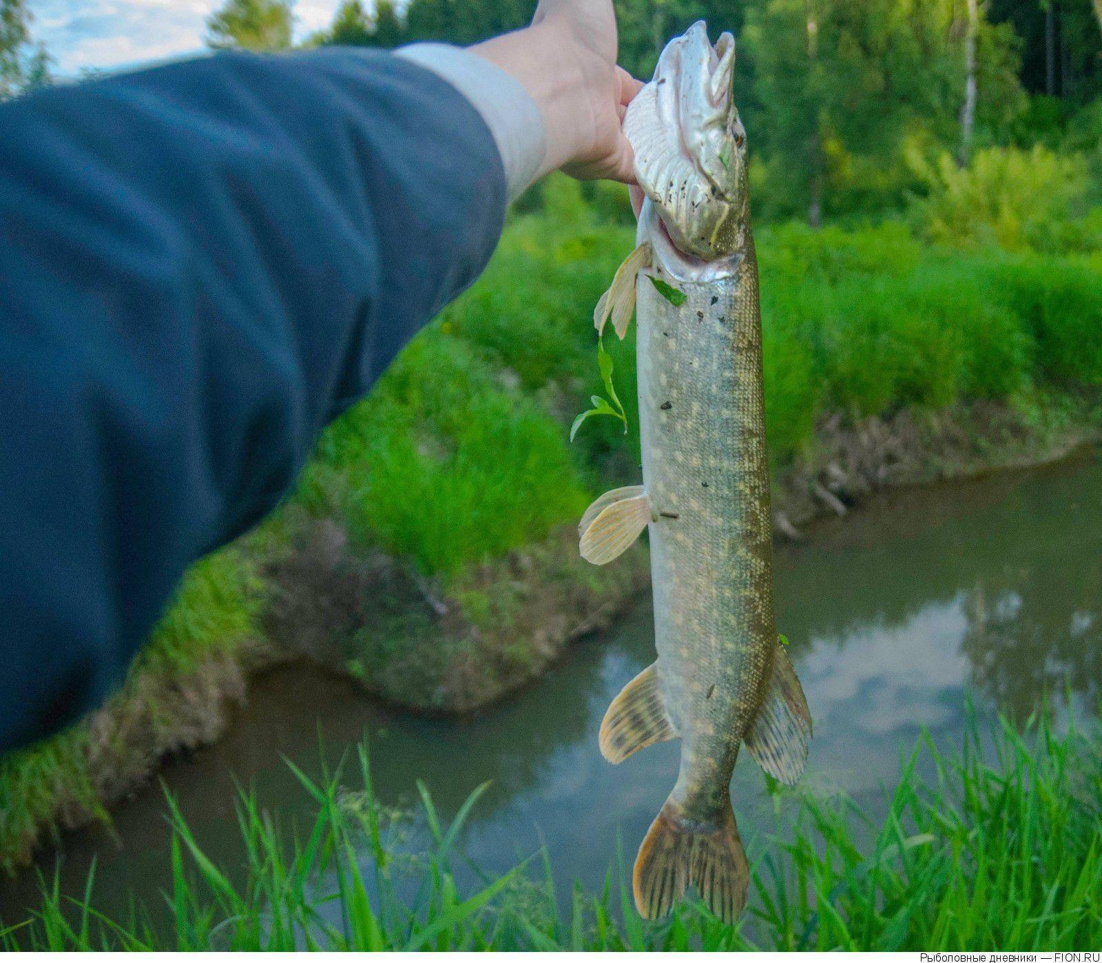 Как найти щуку летом. обзор водоёмов. фото - fishing world