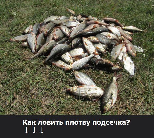 Рабочий способ подготовки опарыша для рыбалки, чтобы сходу клевала даже капризная или сытая рыба. как разводить опарышей в домашних условиях разными способами