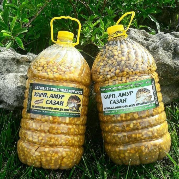 Как ферментировать кукурузу для ловли карпа