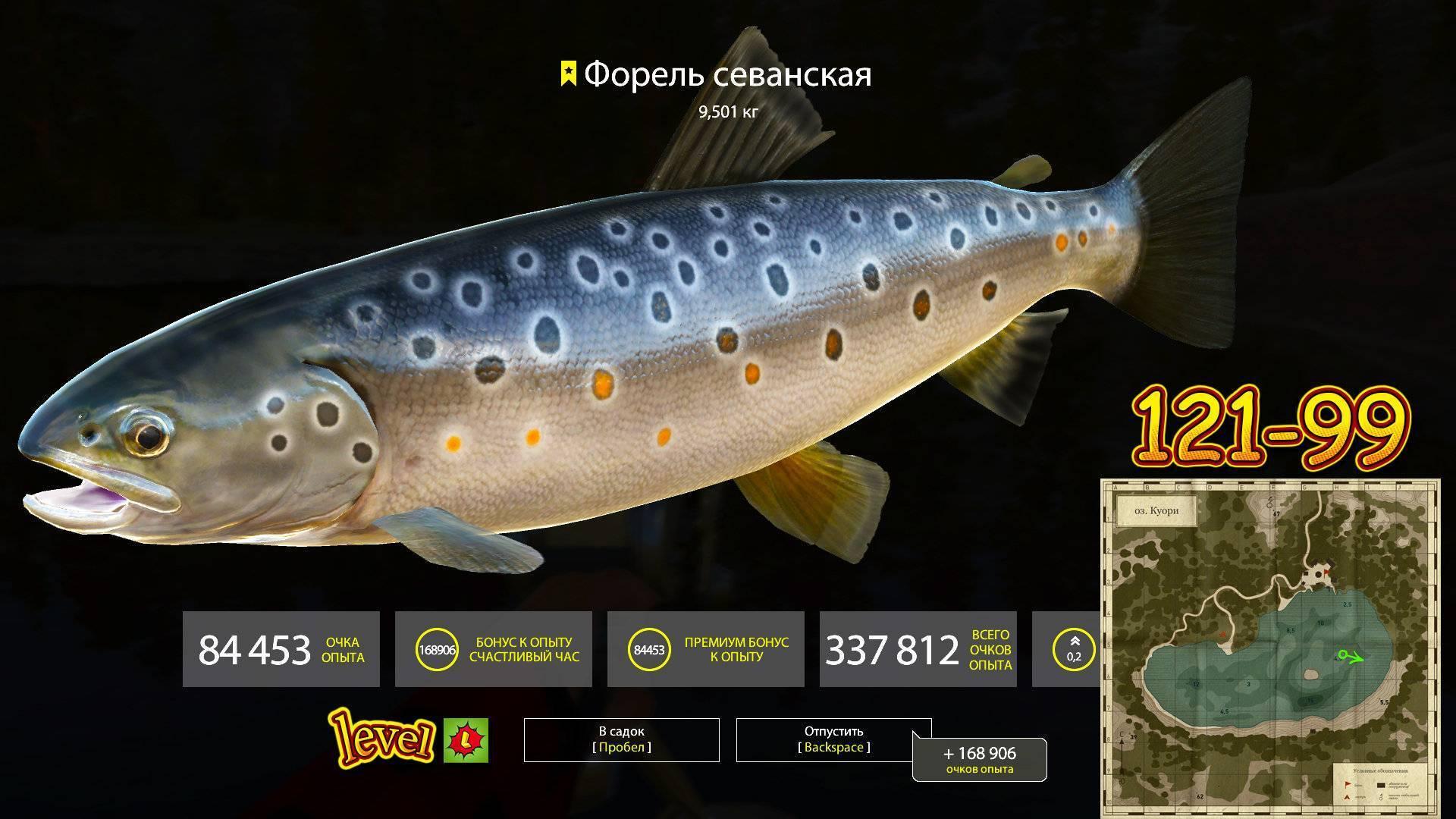 Форель рыба: описание с фото, на что ловить, как вкусно приготовить