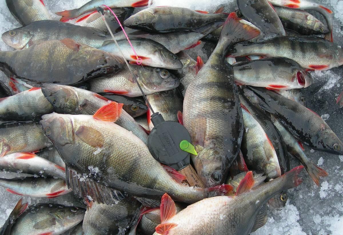 Ока и другие привлекательные водоёмы для рыбалки в рязанской области