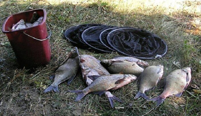 Как ловить леща на сало: секреты удачной рыбалки