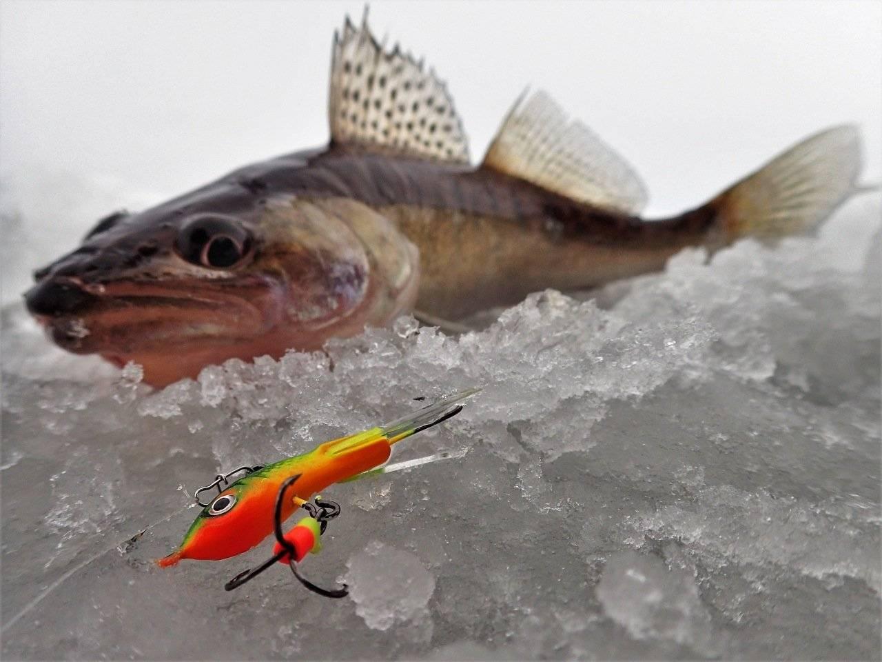 Балансиры на судака зимой – ловля, оснастка удочек, тактика и техника