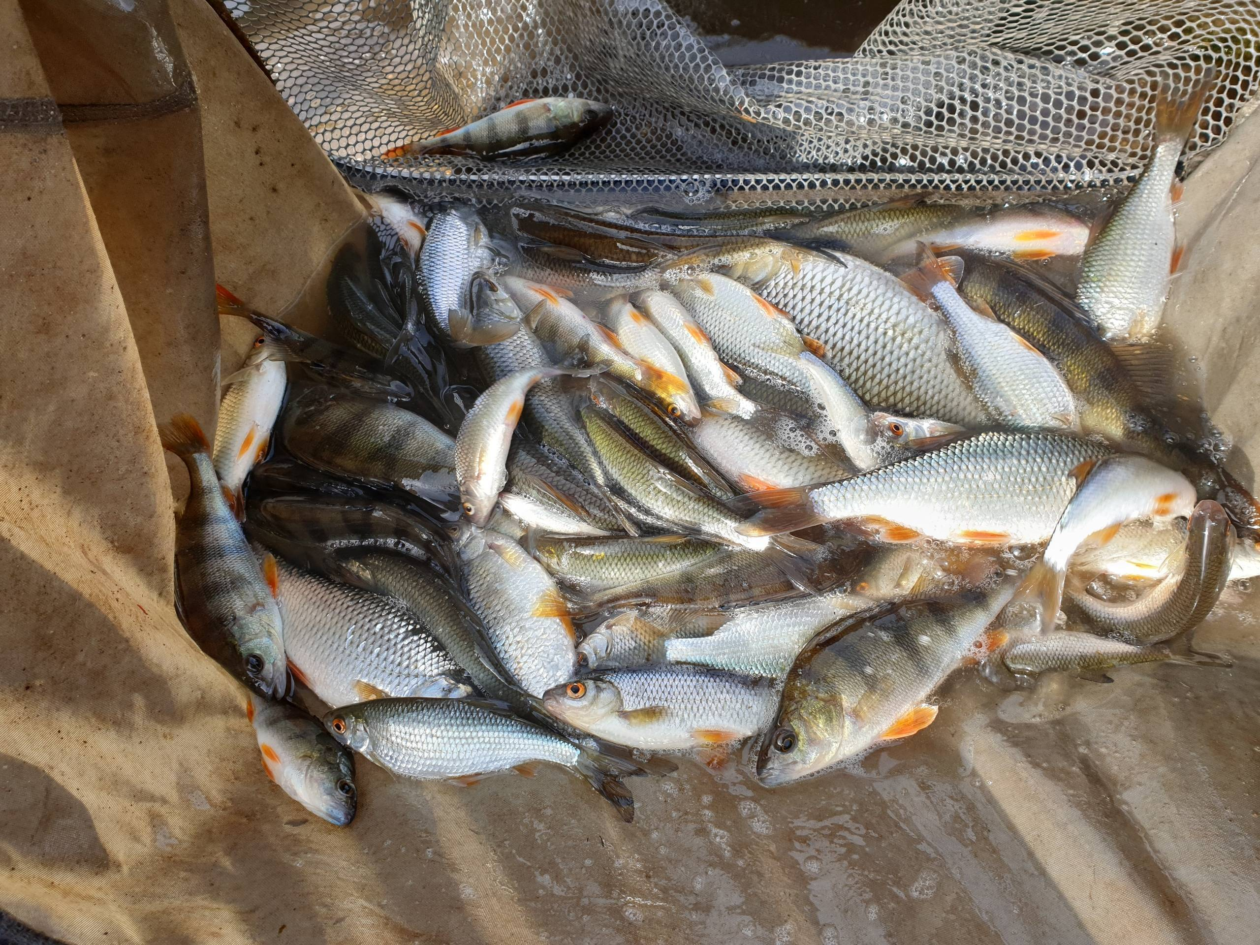 Прогноз клева рыбы. могилёв, могилёвская область