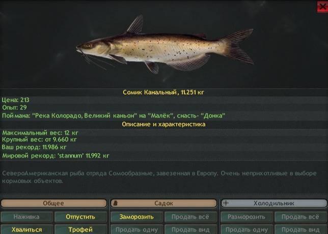 Виды аквариумных сомов (34 фото): разновидности сомиков с названиями, описание анциструсов, пятнистых панцирных и других разновидностей
