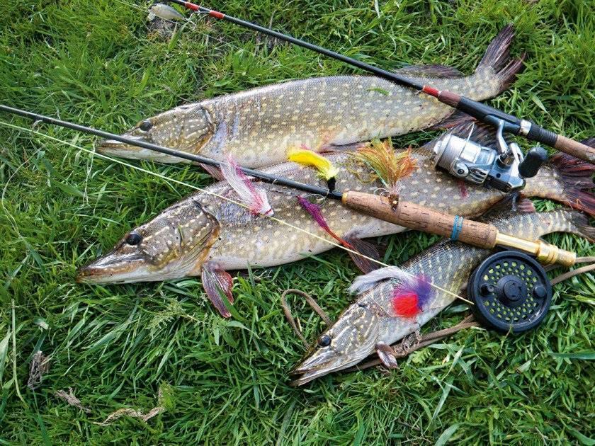 На что ловить рыбу – лучшие наживки и насадки