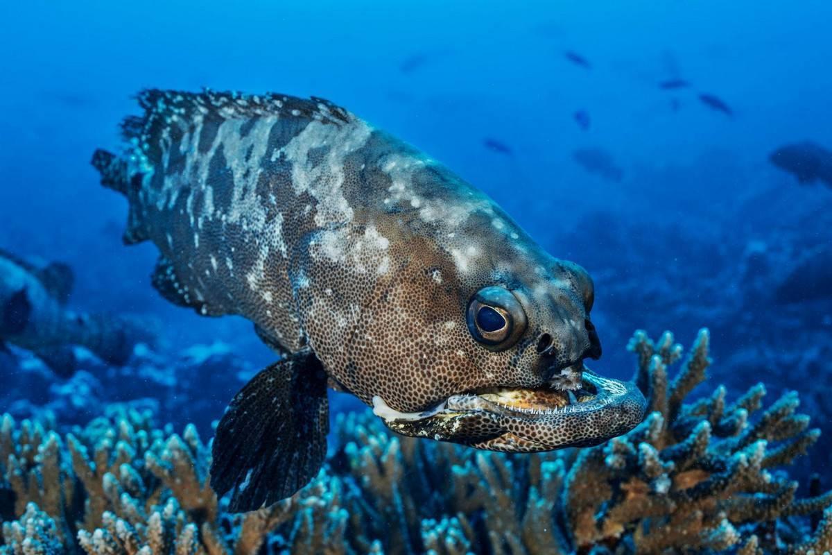Черные аквариумные рыбы (29 фото): название маленькой рыбки черного цвета с красным хвостом и других черных рыб в аквариуме, их описание