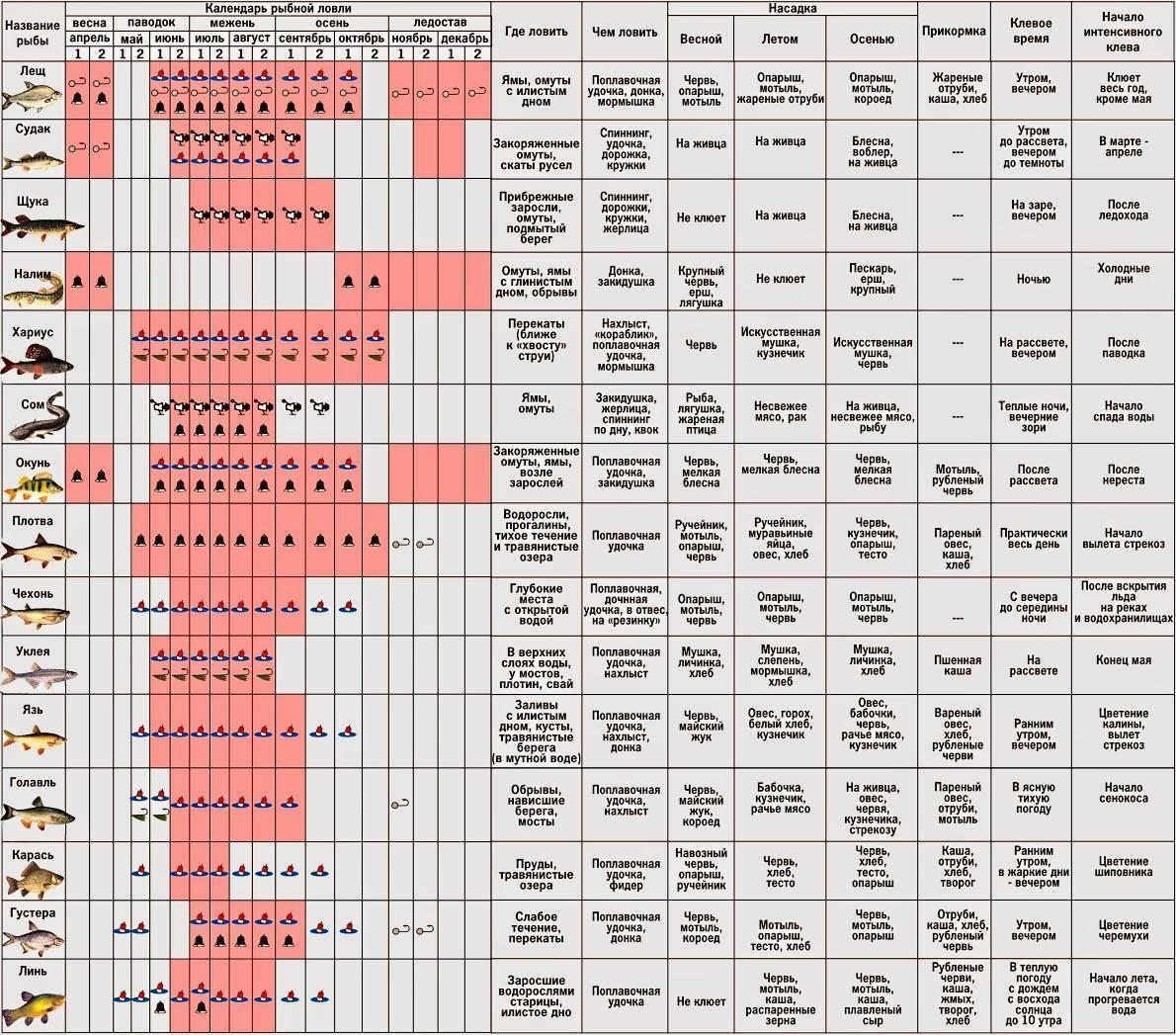 Ловля окуня - календарь клева, выбор приманок и снастей