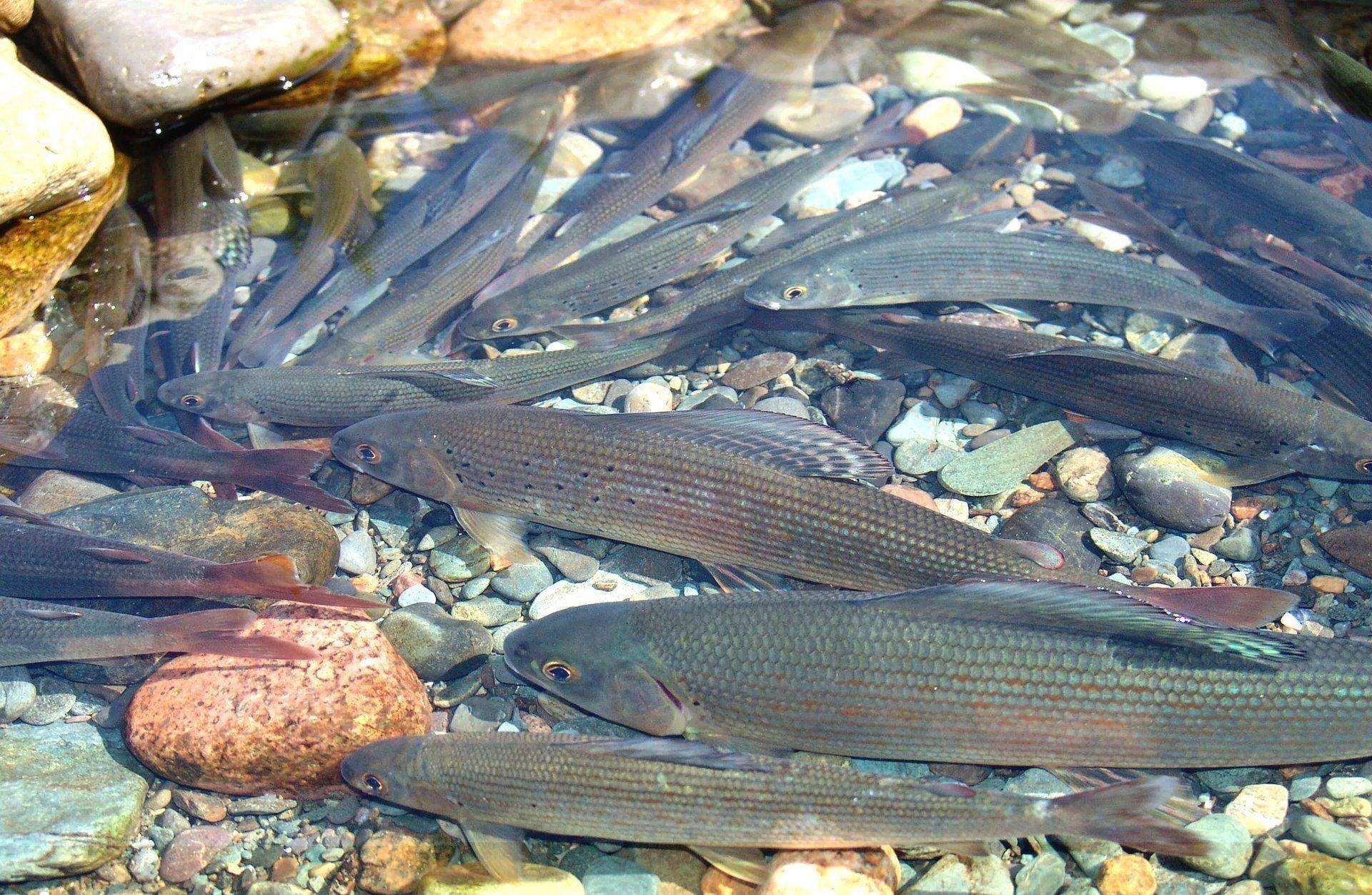 Отдых и рыбалка на телецком озере