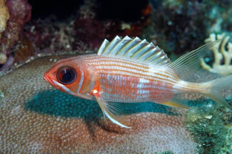Какая рыба содержит больше белка и в каком количестве?