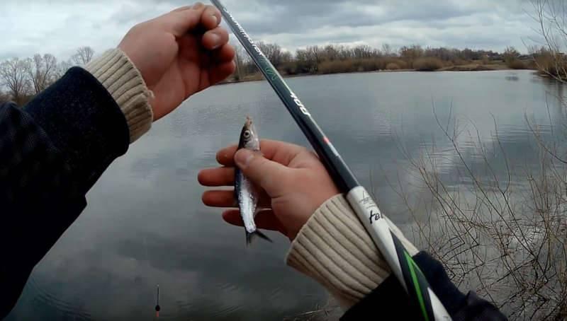 Снасти для ловли уклейки весной на поплавочную удочку: начало клева, подготовка оснастки и поведение рыбы