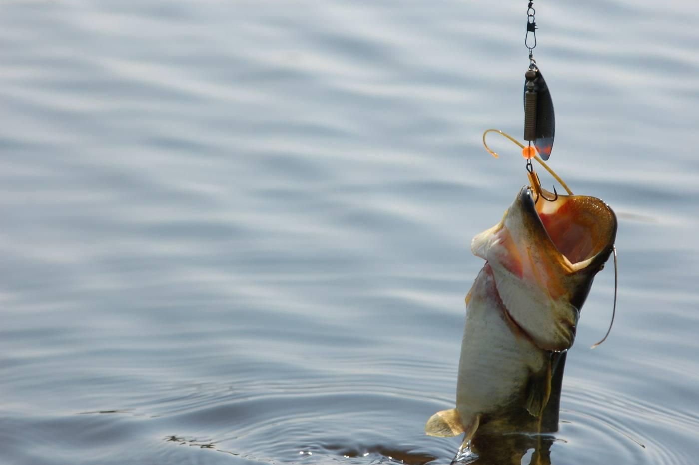 Снасти для рыбалки: обзор самых уловистых и как сделать своими руками