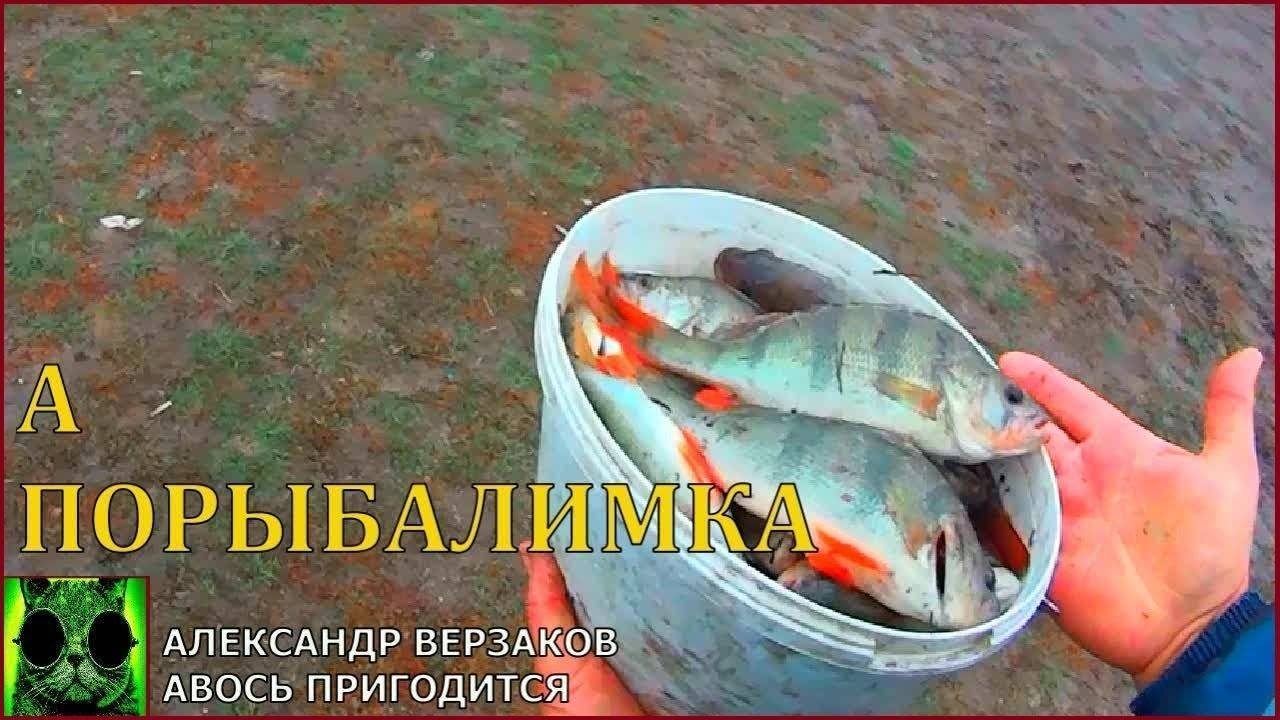 Ловля окуня на живца. как наловить: летом, весной, осенью и зимой