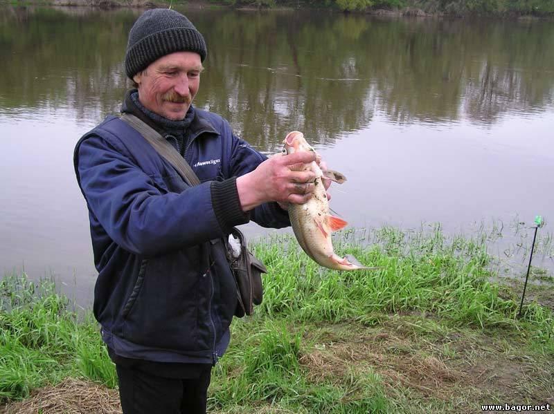 Платная рыбалка в могилевской области: базы отдыха, платные водоемы для рыбалки, рыболовные базы могилевской области