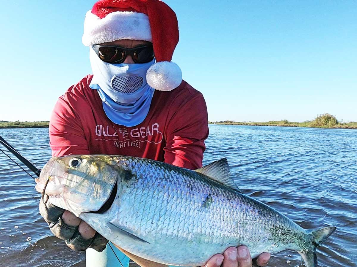 Рыба сайда: фото и описание, польза и вред, применение в кулинарии