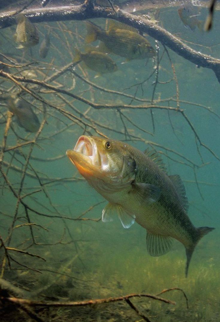 Рыбалка в владимирской области: лучшие места на карте топ-10