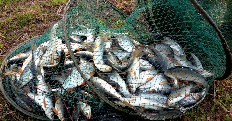 Смена рыбного места— залог хорошего улова