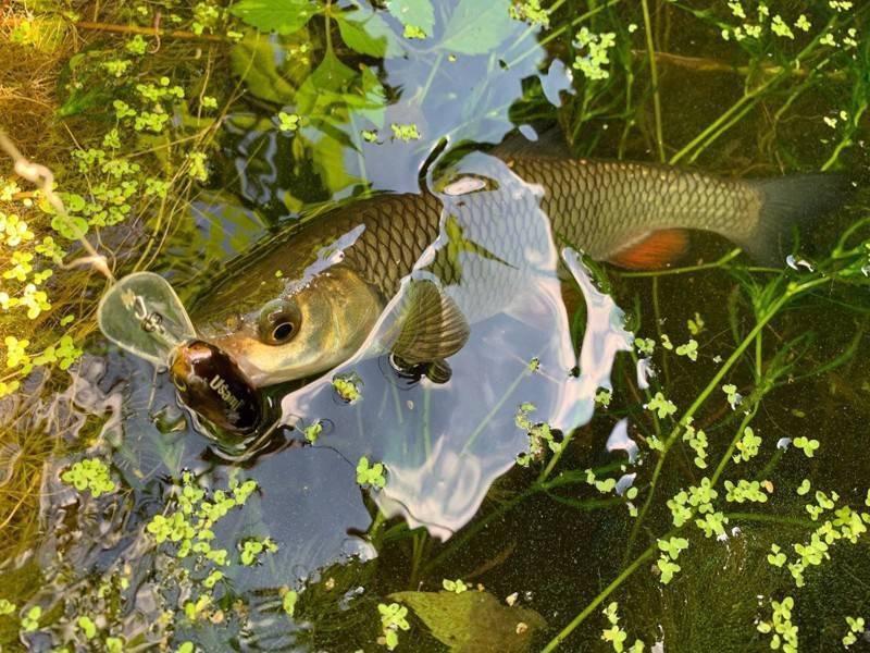 Ловля голавля весной на спиннинг на воблеры. рыбалка на голавля ранней весной на малых реках
