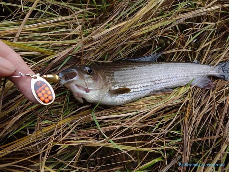 Рыбалка в кемеровской области: платная и бесплатная, выбор мест