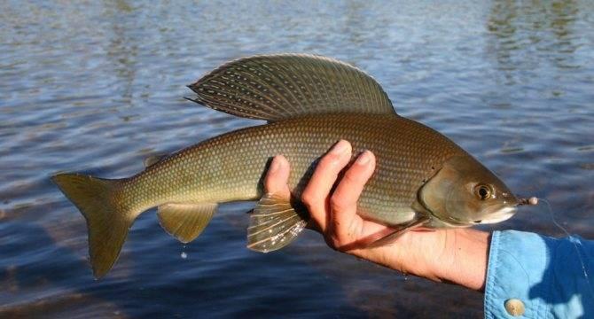 Рыбалка на байкале: особенности ловли рыбы на озере летом и зимой