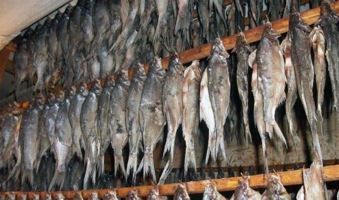 Как вялить рыбу, этапы, рецепт вяления в домашних условиях