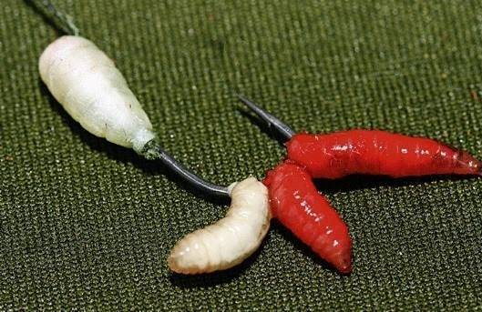 Как покрасить опарыша - способы окраски личинок