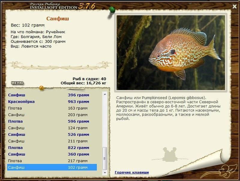 Рыба сибас: полное описание и фото