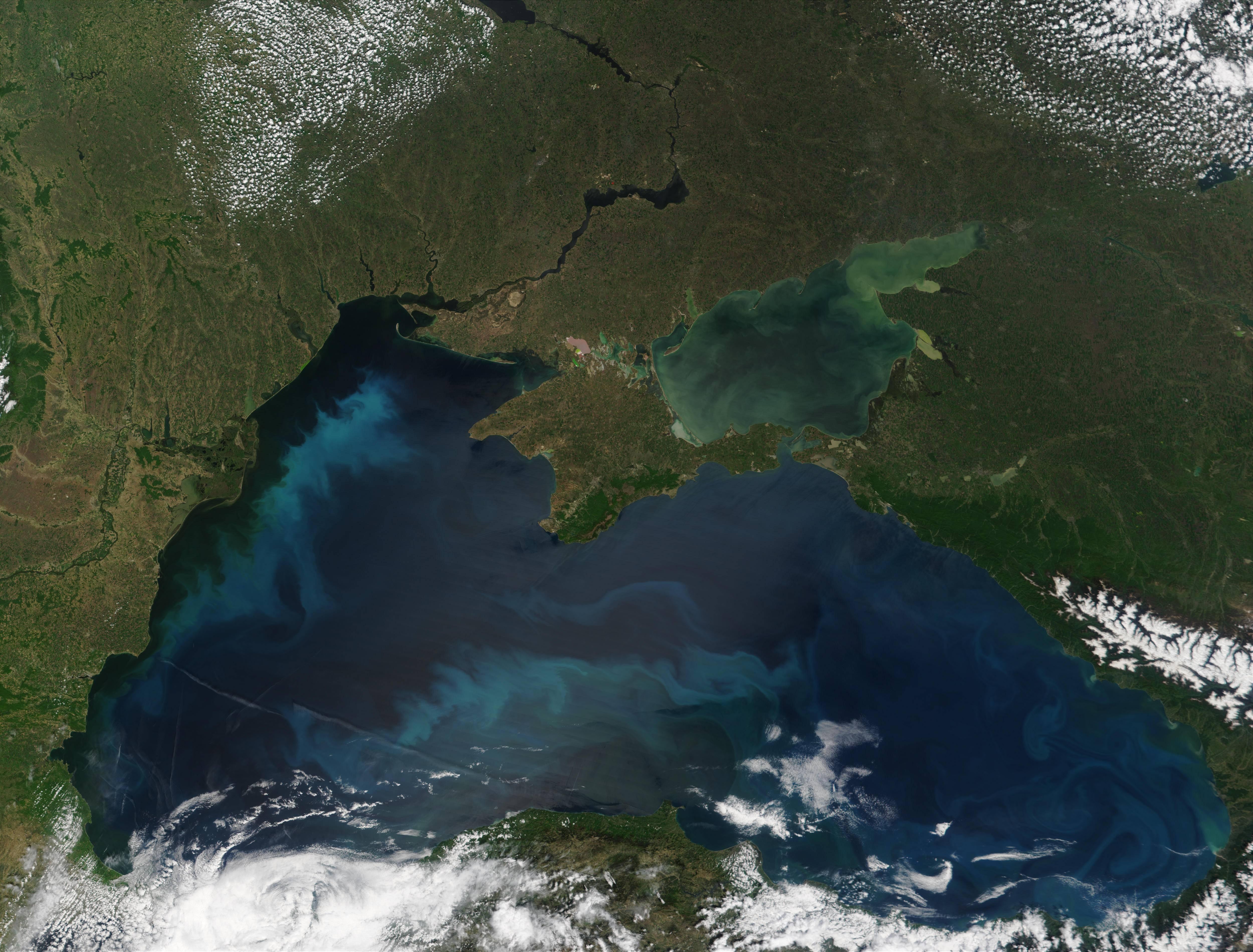 Есть ли скумбрия в чёрном море?