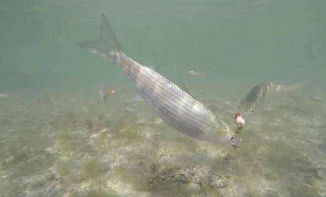 Когда и зачем нужна снасть бомбарда   про рыбалку - секреты рыбной ловли