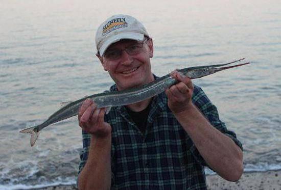 Рыба сарган: фото, ареал обитания в черном море, особенности питания, как ловить