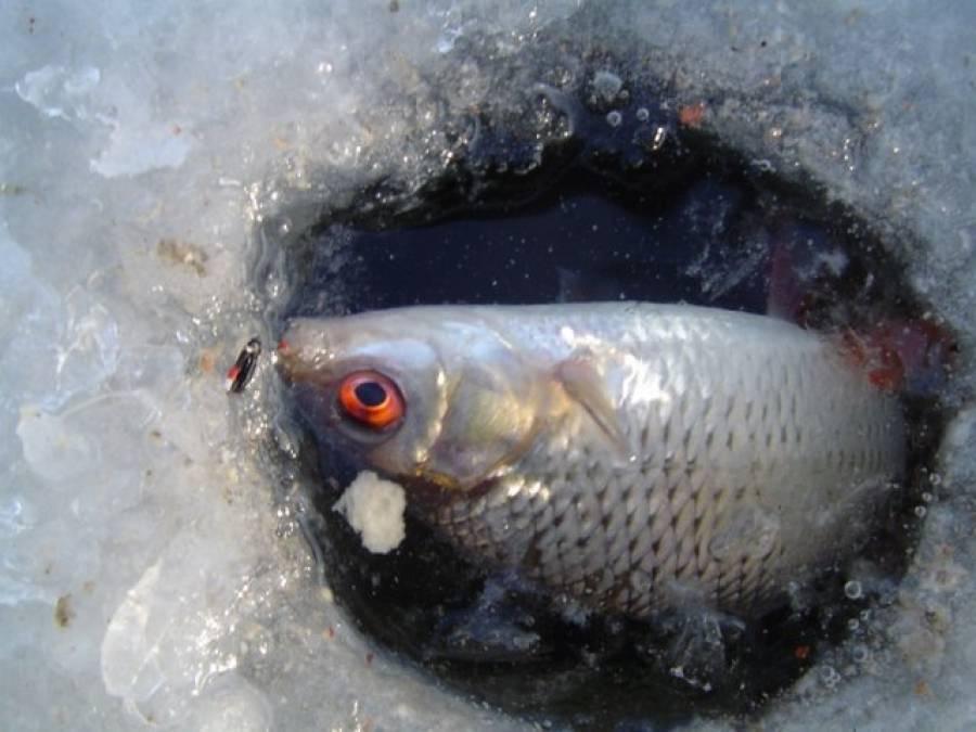 Рыбалка летом на мормышку и подготовка снасти