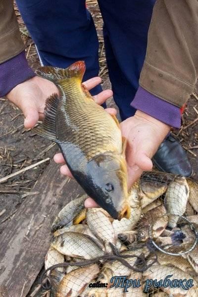 Рыбалка в Тольятти — лучшие места для ловли