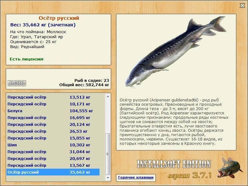 Рыба осетр