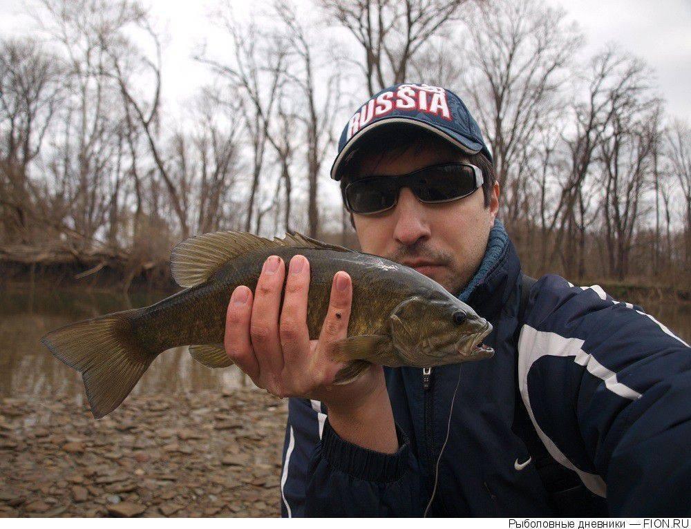 Уникальная рыба с прозрачной головой — малоротая макропинна / бочкоглаз