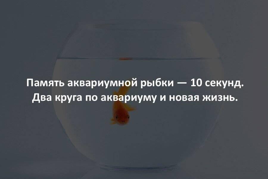 Память у рыб - сколько времени она может запоминать те или иные события